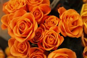 バラオレンジ
