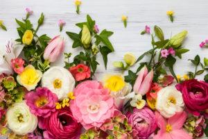 ヘッダー画像,花