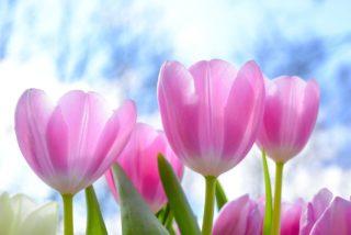2月おすすめ花アイキャッチ