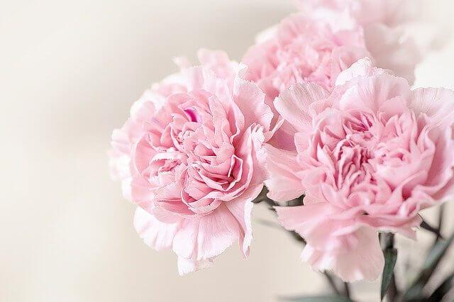 義母母の日カーネーション鉢花