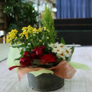 鉢花3,500